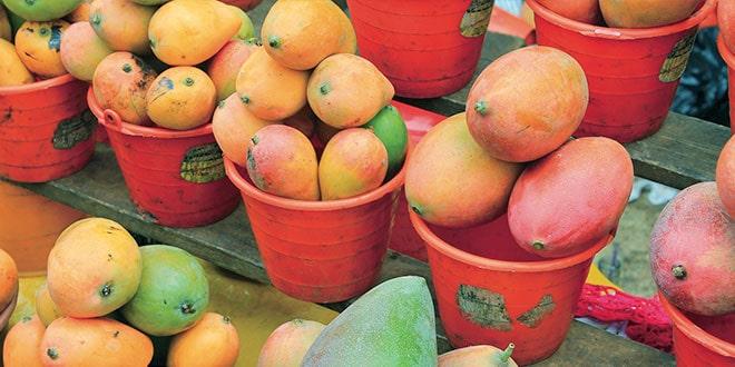 mango-mexicano
