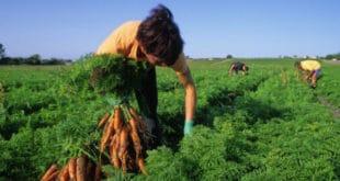 trabajadores agrícolas temporales - Agricultural Guestworker Act