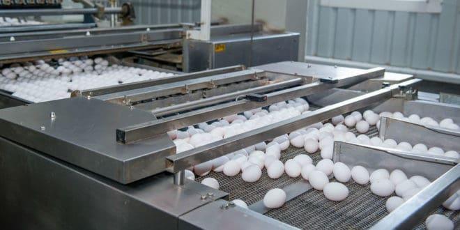 egg products, derivados del huevo