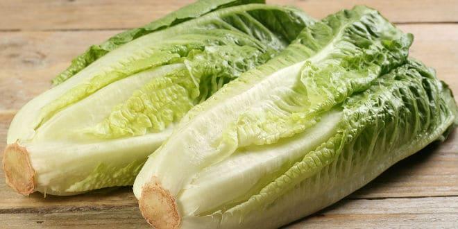 lechuga romana - romaine lettuce