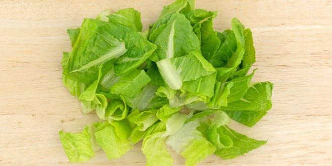 lechuga Romaine - romaine lettuce