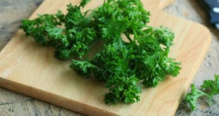perejil rizado, parsley
