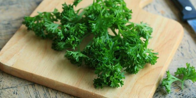 perejil rizado, parsley