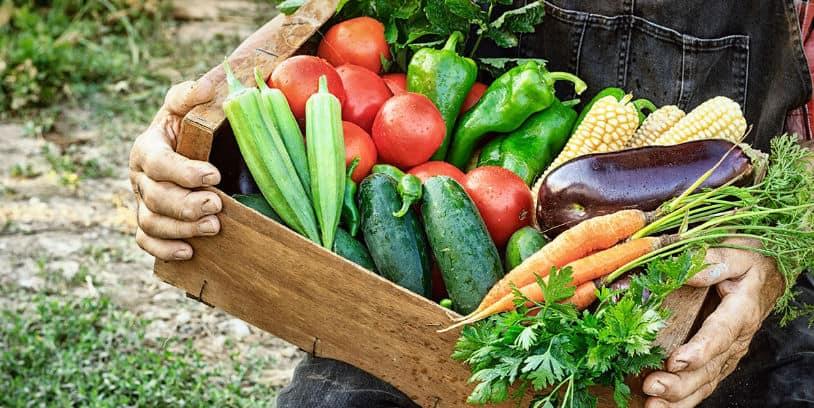 Fresh Produce industry coronavirus - industria de frutas y verduras