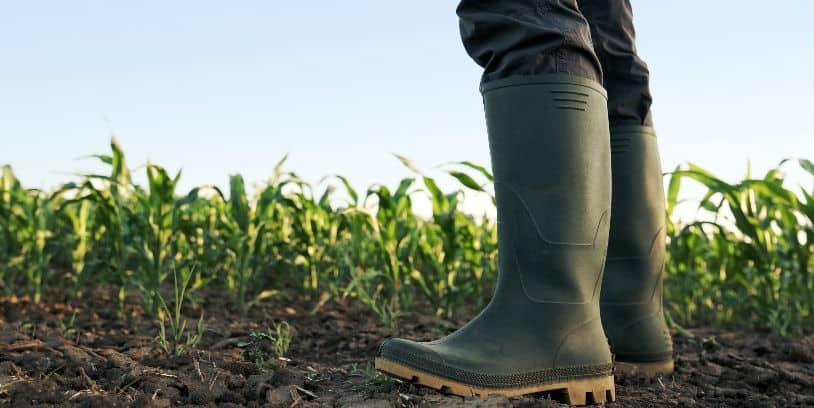 USDA farmers coronavirus - ayuda agricultores