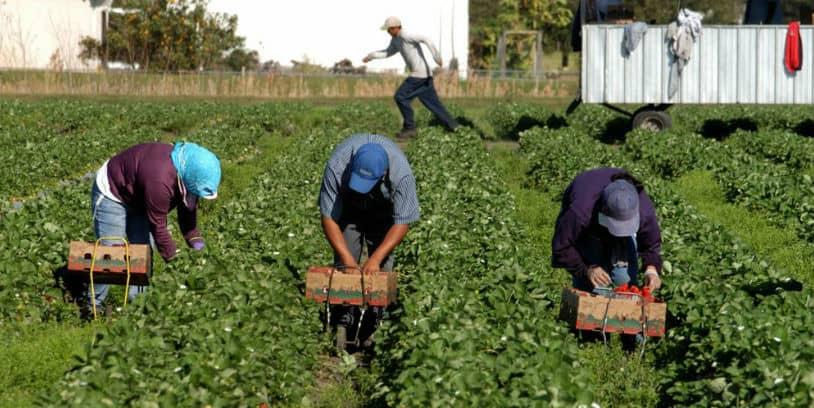 Food Supply Chain Workers - trabajadores de la cadena de suministro de alimentos