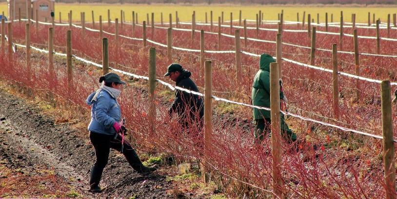 farmworkers - immigration - trabajadores agrícolas