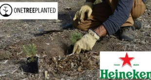 Heineken One Tree Planted
