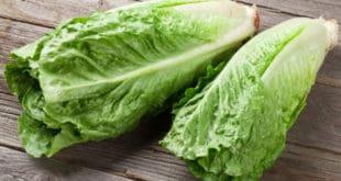 lechuga romana - Romaine lettuce E.coli outbreak