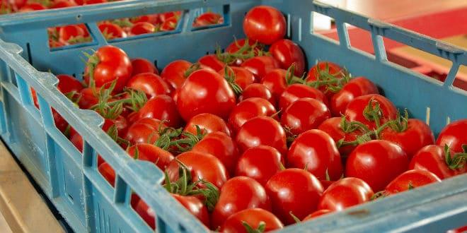 Tomato Suspension Agreement - acuerdo de suspensión