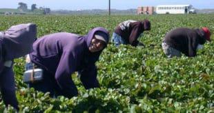 farmworker trabajadores agrícolas